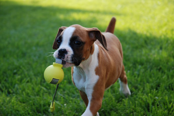 What to Do with Your Pets in the Spring