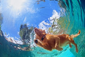 Enjoy the Last Weekend of Summer with your Pets!