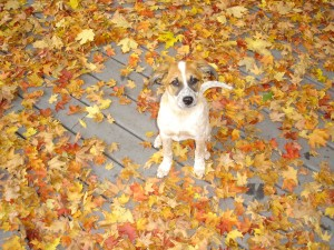 Preparing Pets for Fall