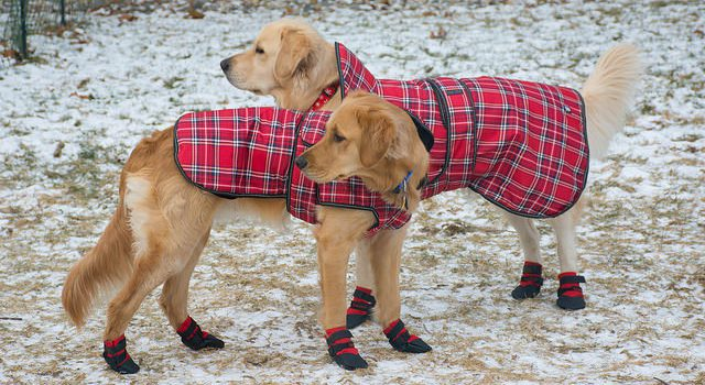 How to Know if Your Pet Needs Winter Gear